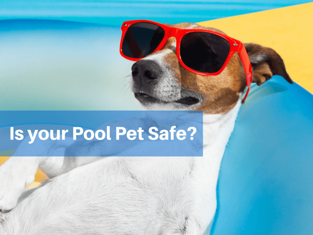 pool pet safe